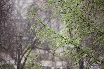 branches of fresh leaves rain