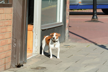 Dog wagging tail outside hairdressers