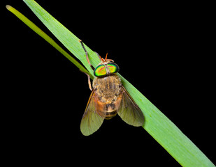 Fly on grass-blade 4