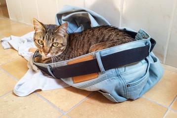 Chat dans le Jean