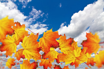Flying autumn leaves