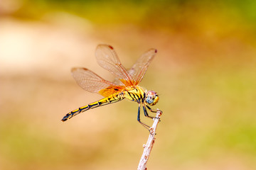 Dragonfly on treetops