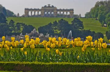 Yellow tulips in front of Gloriette building in Vienna