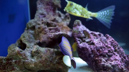 Fish Tank With Angelfish And Longhorn Cowfish