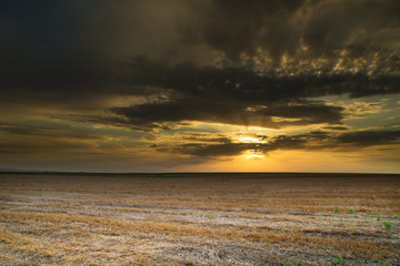 Wheat stubble field over nice sunset, hdr image