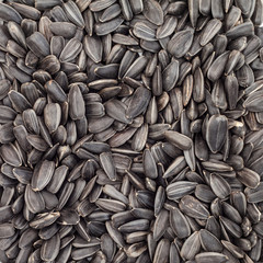 Background of sunflower seeds