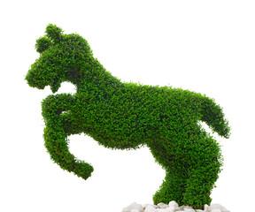 Springendes Pferd aus Buchsbaum vor weißem Hintergrund