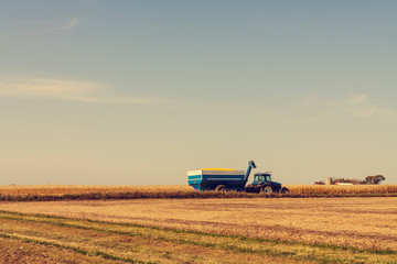 Corn Harvest in American Countryside