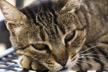 Junge Katze Portrait seitliches Profil mit Pfote ausruhend
