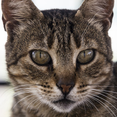 Junge Katze Portrait fokussiert