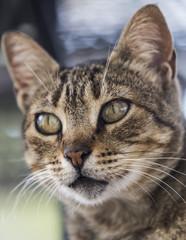 Junge Katze Portrait Profil konzentriert
