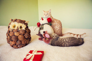 Young Cats With Holiday Background