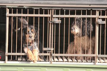 cani per ricerca tartufo