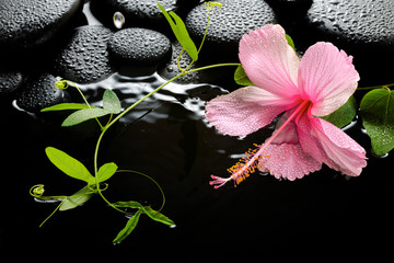 Beautiful spa setting of delicate pink hibiscus, green tendril p