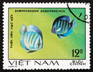 Postage stamp Vietnam 1981 Blue Discus, Fish