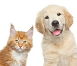 Close-up portrait of cat and dog in front of white background - 69054170