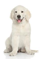 Golden Retriever puppy portrait