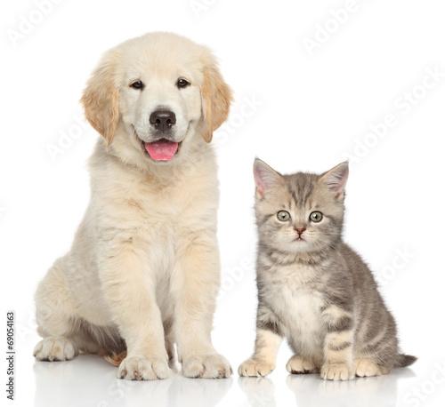 Fototapeta Cat and dog together