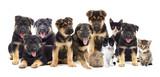 set of pets - 69056750