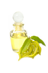 ylang-ylang aroma massage oil