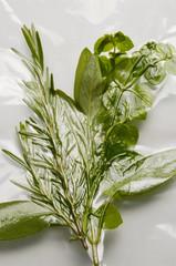 Erbe sottovuoto Vacuum packing herbs Vakuumverpackung Kräuter
