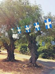 Alberi di ulivo sulla strada in Grecia