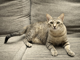 kitten on his couch