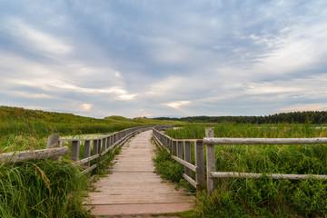 A wooden bridge over a marsh in the Cavendish Dunelands