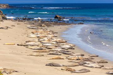 Seal Elephants