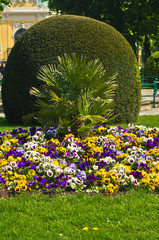 Decorative plants and flowers from Schenbrunn park in Vienna