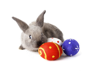 Rabbit with Easter eggs isolated on white