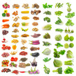 vegetable, herb, spices isolated on white background