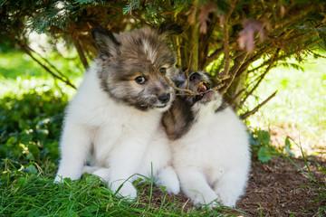 zwei Elo Welpen unter einem Baum