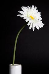 White flowers - 04