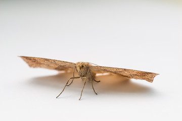 Moth resting on white paper. Selective focus.