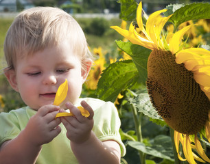 Baby girl and sunflower