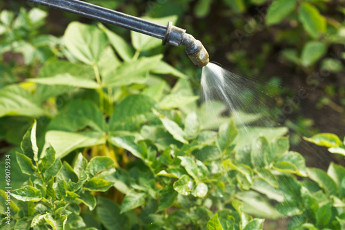 processing of pesticide on country garden - 69075934