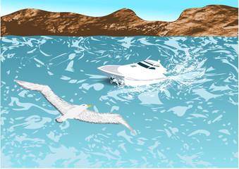 boat and albatross
