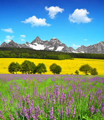 Beautiful spring mountain landscape with flowering meadow