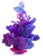 color dop - 69078725