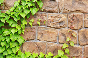 Stone wall with green plant as background.