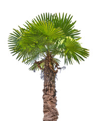 green small palm isolated on white