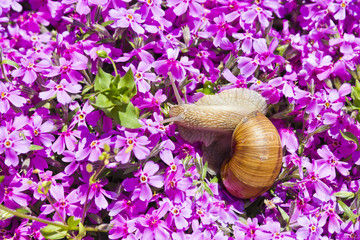 Snail in flowers