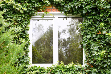 green ivy around new plastic window