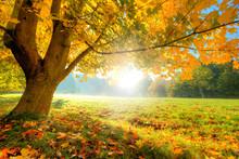 Piękne drzewa jesienią z opadłych liści suchych