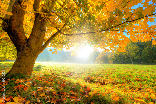 Beautiful autumn tree with fallen dry leaves poster