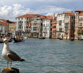Seagull on the pole to anchor the ship in grand canal