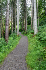 Waldweg im Nadelwald