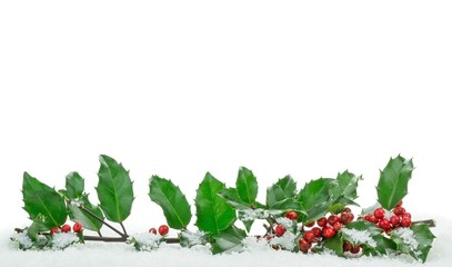 Christmas holly with snow with copy space on a white background