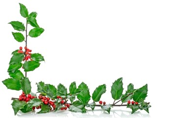 A Christmas corner border frame with holly on white background